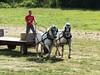 Howell Farm Plowing Match 204 (Adam Cooperstein) Tags: howelllivinghistoryfarm mercercountyparkcommission mercercounty newjersey mercercountynewjersey lambertville lambertvillenewjersey