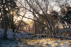 Lost In A Woodland (.Brian Kerr Photography.) Tags: socialmedia cumbria hartsidepass hartside snow winter cold trees landscape photography outdoorphotography light availablelight sonyuk a7rii briankerrphotography briankerrphoto