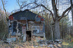 Casualty of Progress (Angela D Beck) Tags: decay decaying weathered abandoned leftbehind nikon d750 rural rustic fallingapart building home house homestead shed tobacco tree branch branches overgrown
