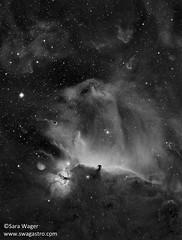 B33 (Horsehead nebula) in mono (Sara Wager (www.swagastro.com)) Tags: sarawager swagastro wwwswagastrocom astrophotography astro astronomy astrodon astronomia astrology cosmos cosmology constellation deepspace deepskydso dso emission emissionnebula interstellar nebula nebulosity nebulae horsehead b33 ic434 orion stars star sky skies skyatnight space universe telescope takahashi takahashifsq85 fsq85 qsi683 qsi moravian g28300 kaf8300 mesu mesu200
