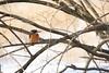 DSC032982 (Thomas LordIce) Tags: tiere munich animal birds vögel eisvogel