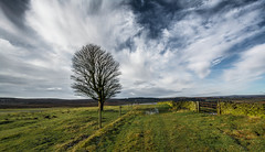 The Lone Tree.... (johngregory250666) Tags: uk derbyshire rural nature british countryside camera lens green yellow orange stone nikon nikkor hiking walking lines clouds sky blue moss lichen out brook glow grass imagesofengland amazing water light outdoor field trees plant moors ridge great national park dale new d5200 rock formation rays world people pass outside cloud temperature sunset view white sea snow snowy kinder brown fox house sunshine shadows houndkirk moor lone tree