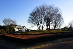 kashiwanohaparkcenter_17110 (takao-bw) Tags: 公園 管理センター park 空 sky 植え込み shrubbery 風景 landscape japan