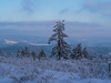 Lonely Tree braving the snow (jonasschmidt1909) Tags: lonely tree wonderland snow cold sauerland germany omd em10 landscape