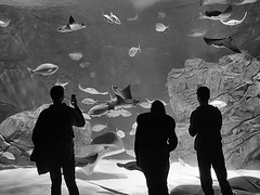 Ripley's Aquarium, Toronto, Ontario (duaneschermerhorn) Tags: people shadows black white blackandwhite blackwhite bw fish aquarium ray manta sting mantaray stingray coral