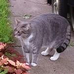 Bad cat stalking birds thumbnail