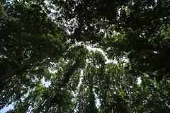 Trees (blondinrikard) Tags: travel iran tehran teheran saadabad 2015 thesaadabadpalace