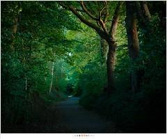 Een holle weg in de schemering (nandOOnline) Tags: nederland natuur insekt dier limburg kever lucanuscervus gewei jabeek holleweg vliegendhert hertkever grootvliegendhert