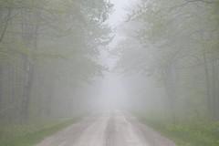 Vanishing point (virgil martin) Tags: mist fog spring