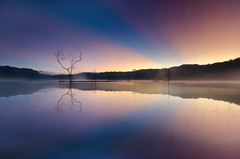 Tamblingan Branch (wisnu taranninggrat) Tags: bali lake reflection sunrise nikon branch lee gnd tamblingan