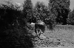 Colosseum (varjagg) Tags: leica italy man rome june stone wall 35mm bag climb kodak trix 400tx luggage 150 summicron 400 f2 rodinal m4 v4 2015 preasph