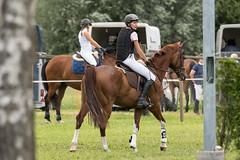 DSC06984_s (AndiP66) Tags: springen utzensdorf samstag saturday 2015 juli july pferd horse schweiz switzerland kantonbern cantonofbern concours contest wettbewerb horsejumping springreiten pferdespringen equestrian sports pferdesport sport martinameyer grueb wolhusen luzern sony sonyalpha 77markii 77ii 77m2 a77ii alpha ilca77m2 slta77ii sony70400mm f456 sony70400mmf456gssmii sal70400g2 andreaspeters 25juli2015 utzenstorf bern ch