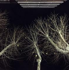 magic of light (chiara mon) Tags: city trees winter light night montevideo