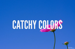 Celebrate the Catchy Colors all around you! #CatchyColors