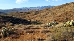 20161210_084816 (Ryan/PHX) Tags: trailrunning bct blackcanyontrail arizona desert outdoors ultrarunning aravaiparunning