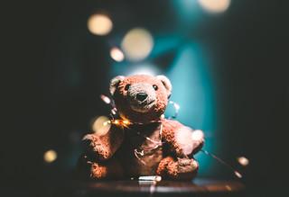 [ teddy ]