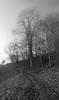 Slightly Unreal (e27182818284) Tags: sigma1020mmf35exdchsm nebel fog baum tree path pfad