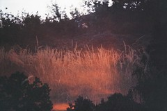 That warm place in my heart... (AirSonka) Tags: smena smena8m lomo toycamera analog analogue película pellicule 35mm argentique film filmphotography doubleexposure doubleexposed multipleexposure doppelbelichtung sunset eveninglight grass trees silhouette airsonka soniakaniss kodakgold200