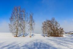 Der lange Schatten der Birke im Schnee (Fotos4RR) Tags: birke schatten shadow schnee snow birch winter baum bäume tree trees