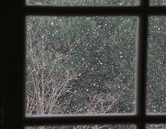 L'hiver par la fenêtre (Pi-F) Tags: fenêtre vitre carreau neige paysage hiver arbre branche dof plugged tree winter landscape snow tile window abstract zweig baum landschaft schnee fliese fenster zusammenfassung