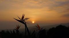 Sunset LA Mountains (aberamati@ymail.com) Tags: a6000 sony zeiss touit 32mm f18 la california mountains getty flowers