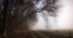 Beyond the fog lies Clarity (Fragile Decay) Tags: fog morning trees nature mist netherlands dutch nederland fence fragiledecay