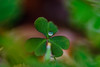 ECS_0741 (Deepak Kaw) Tags: drop beautiful bokeh droplet dof heart art artistic nikon nature round green macro bright colors composition colours flickr india