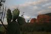 Dawn at Bell Rock (nikname) Tags: bellrock sedona arizona sunrise redrocks arizonausa arizonaredrocks bellrocksedonaarizona travelplanet sedonaarizona dawn sedonasunrise cactus pricklypearcactus