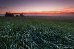 Beginning of the day (Andrei Reinol) Tags: summer early morning sunrise beautiful warm landscape estonia eesti baltic estonianlandscape travel outdoors adventure photography grass sky colors view foreground trees europe nordic light clouds