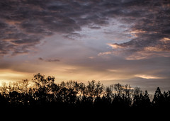 Color in the Clouds (ChristopherSmith.Photo) Tags: sky clouds sunrise dawn sunset dusk colorful colors light purple yellow serene calm peaceful trees silhouettes black