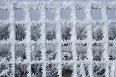 Frozen Fence HFF! (lique1304) Tags: fence fencephotography fenced cold winter snow ice outdoor canon hff fencefriday