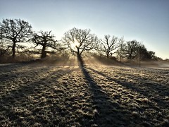 Dawn (Heaven`s Gate (John)) Tags: misty morning dawn sunrise frosty trees silhouette shadow landscape johndalkin heavensgatejohn atmosphere dickensheath england nature reserve field blue sky sunshine grass 10faves 25faves