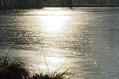 _DSC1729_DxO (Alexandre Dolique) Tags: d810 base de loisirs étampes gelée
