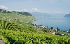 Riex gone (Riex) Tags: vineyards vignoble vignes ete summer landscape paysage lavaux village lac lake leman vaud suisse switzerland a900 amount 35mm f2 af minoltaamount minolta