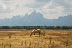 (alexsg12) Tags: rockies grandteton wyoming jacksonhole nature horse