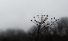Misty_Hike (3) (vlmiller@pacbell.net) Tags: trees 80d blacknwhite canon mist minimalsim art minimal