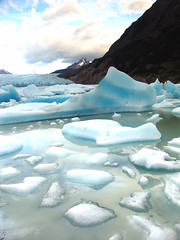 Icebergs and Parakeets. Lago Grey, Patagonia