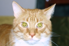 Bad example of a kitty photo (for class) (bcostin) Tags: quincy example greeneye forclass