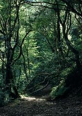 Laurisilva forest (1999)