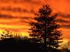 sunset closeup (EssjayNZ) Tags: winter sunset newzealand 15fav orange tag3 taggedout 1025fav 510fav catchycolors ilovenature fire gold tag2 tag1 seasons 2006 100v10f essjaynz lichfield interestingness20 interestingness70 taken2006 i500 theworldthroughmyeyes fcsetsrises sarahmacmillan