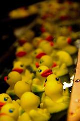 Duck, duck, duck, ... (joschmoblo) Tags: copyright tag3 taggedout d50 duck nikon tag2 tag1 statefair 18200 allrightsreserved 2007 joschmoblo christinagnadinger