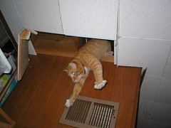 Commando Kat... (andrea z) Tags: cat orangecat kat basement ceiling pete portal happyaccident commando