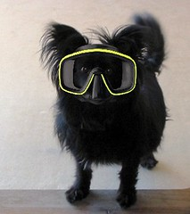 Silly Saturday ! (Foxicat) Tags: dog black interestingness foxicat mask scuba sillysaturday interestingness226 interestingness205 interestingness202 interestingness162 interestingness77 interestingness193 interestingness189 interestingness203 interestingness188 i500 explore20aug05 interestingess153