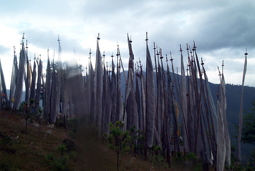 Forest of prayer flag poles