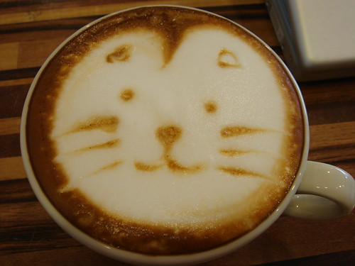 cat face on cappuccino