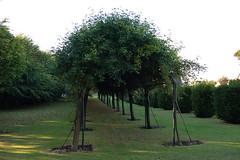 DSC_1349 (Mapo UK) Tags: eastlothian prestonpans trees archway