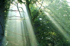 Morning sunbeams (algo) Tags: light sun topf25 leaves topv2222 forest photography licht interestingness woods topf50 topv555 topv333 topf75 500plus seasons topv1111 topc50 chilterns topv999 explore top20nature topv topf150 algo topv3333 topf100 topv666 forests sunbeams shaftsoflight halton naturesfinest 594 nocheat interestingness6 celastial chilternforest top20nature1 explore6 3000v120f
