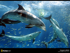 Dolphin  (DigiPub) Tags: ilovenature aquarium aqua dolphin  yokohama    gettyimages
