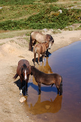 bodmin moor horses 2 (biotron) Tags: cornwall bodminmoor geology tor cheesewring caradon minions rock formation natural cairn granite slabs blue sky cloud lonely equine horses pool pond water shadow reflection relief drinking heat bracken ferns schlong wanger erection penis boner lookatthesizeofthat ifeelinsignificantallofasudden pleasedtoseeme ithoughtso dong plonker willy cock dick knob leathery oohlala bestiality