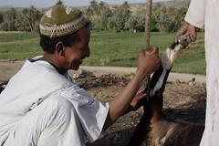 slaughtering at suq salamat 7 (David Haberlah) Tags: manasir mainland suq salamat sudan fourth nile cataract 4thcataract tribe relocation daralmanasir